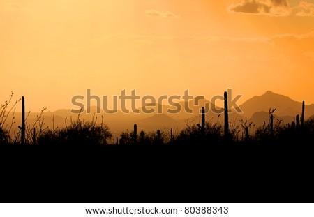 Evening scene over Saguaro national park Arizona - stock photo