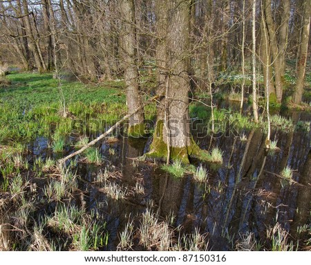 evening scenery showing a small bog in Southern Germany - stock photo