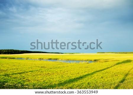 Evening Summer Landscape - stock photo