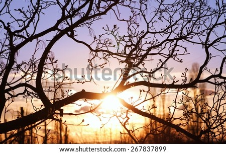 Evening sun - stock photo
