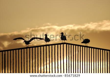 Evening sunset - stock photo