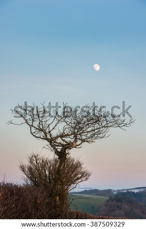 Evening sunset with the moon rising over a tree in rural North Devon, UK. January - stock photo