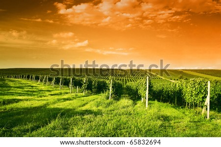 Evening view of the vineyards in Moravia - stock photo