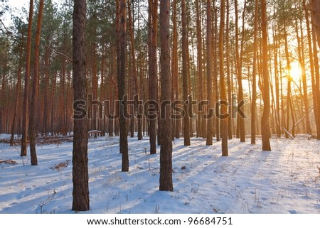 evening winter forest - stock photo