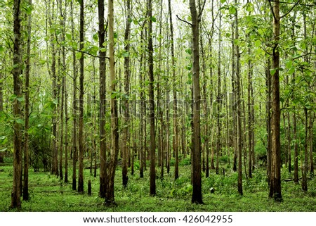 Ever green forest - stock photo