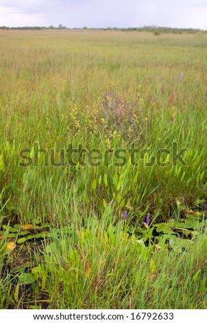 Everglades Canal and Grass Landscape, Anhinga Trail, Everglades National Park - stock photo