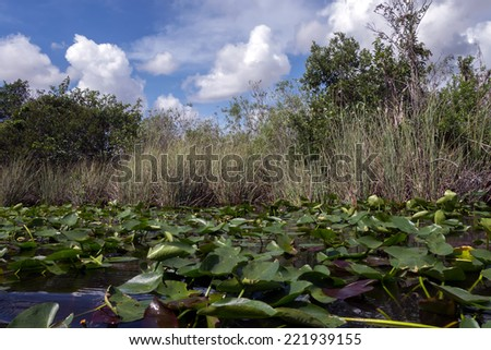 Everglades National Park in Florida is the largest wilderness of any kind east of the Mississippi River, visited on average by one million people each year. - stock photo