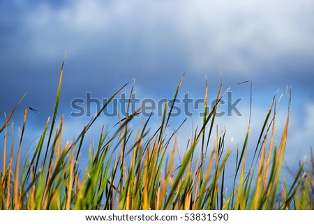 Everglades sawgrass and pond in the Florida Everglades against a blue sky - stock photo