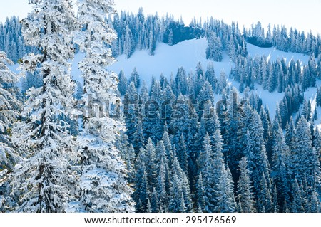 Evergreen Forest at Mount Rainier National Park - stock photo