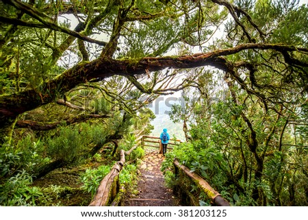 Evergreen forest in Garajonay national park with female tourist in blue jacket standing on the viewpoint terrace on La Gomera island in Spain - stock photo
