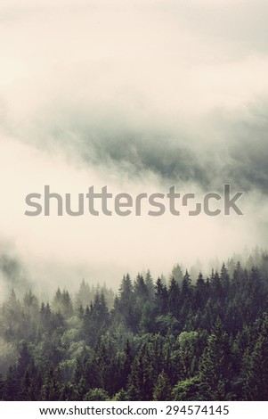 Evergreen forests on mountain slopes enveloped in low lying cloud for a dreamy landscape, vertical view - stock photo