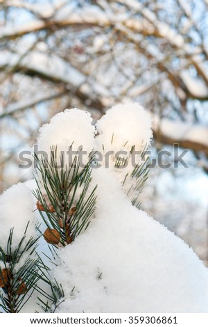 Evergreen pine branch twig covered with clean white snow. Bright vertical outdoors close-up image
