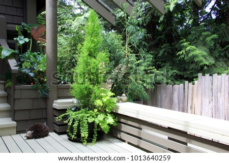 Evergreen shrub in a pretty container on a front porch.