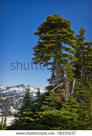 evergreen tree and snow covered mountains in the Pacific Northwest part of the United States - stock photo
