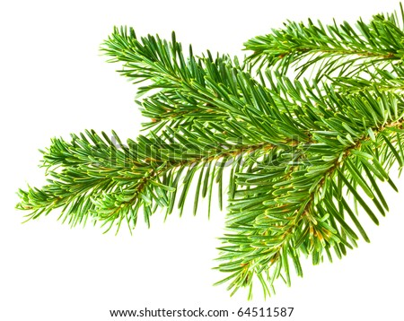Evergreen Tree Branch Frame Isolated on White Background - stock photo