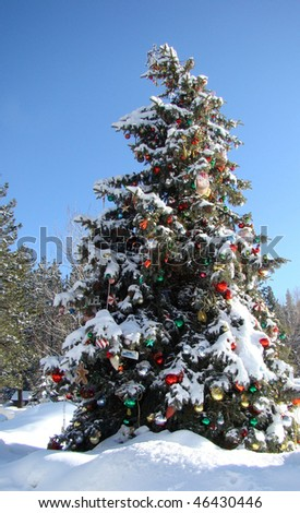Evergreen Tree Decorated For Christmas - stock photo