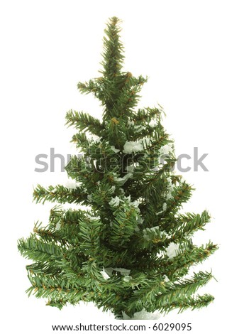 Evergreen tree with snow on it isolated on white background