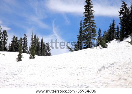 Evergreen trees line the top of a snowy mountain hill along Chinook Pass in late June - stock photo