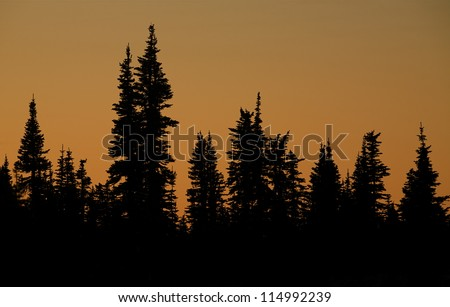 Evergreen Trees silhouetted on a twilight sky; alpine trees at Glacier National Park, Montana; abstract background nature photography - stock photo