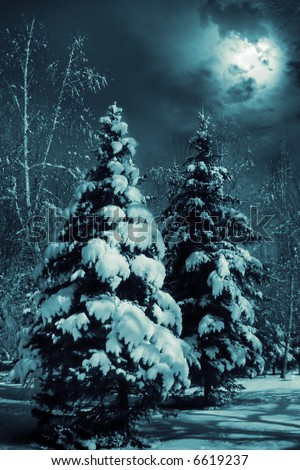 Evergreens at snowy winter forest in the night.  Special toned photo f/x. - stock photo