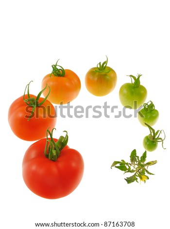 Evolution of red tomato isolated on white background - stock photo
