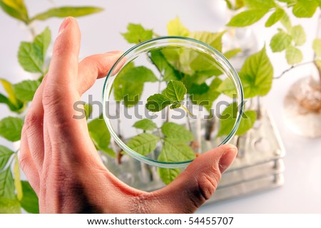 Examine floral samples over microscope, taking sample - stock photo