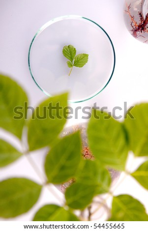 Examine the plants, experimenting with flora in laboratory - stock photo