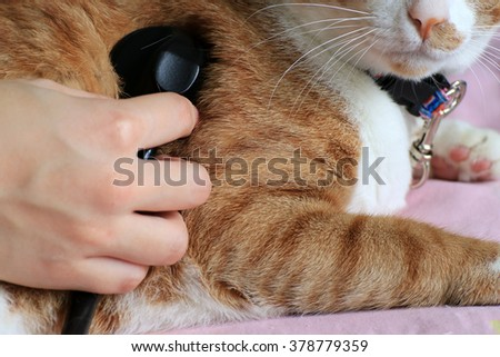 Examined on cat to hear heart sound