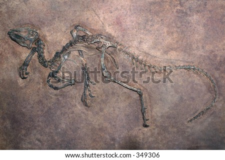excavated dinosaur fossil partially embedded in rock - stock photo