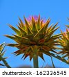Excellent wild artichoke in full bloom, with all the large  thorns perfectly symmetrical on the slender stalk and its splendid purple flower looking at the radiant blue sky - stock photo