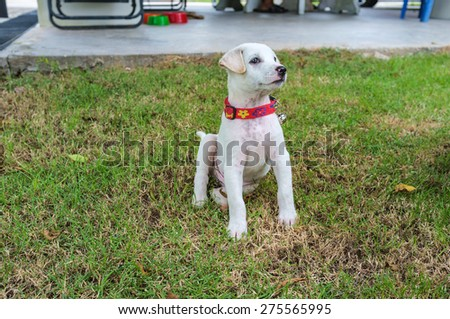 exciting puppy playing in the field - stock photo