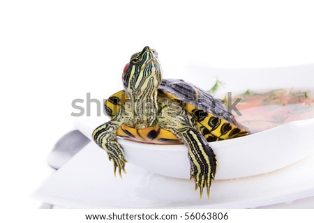 Exclusive supper on the white isolated background