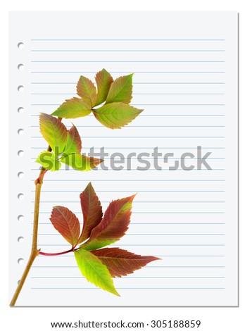 Exercise book with multicolor virginia creeper twig (Parthenocissus quinquefolia foliage). Back to school background - stock photo