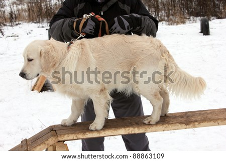 exercise training retriever dogs