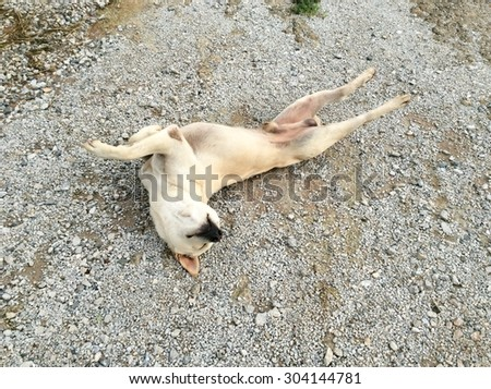 Exercising dog playing yoga on floor cement backgrounds