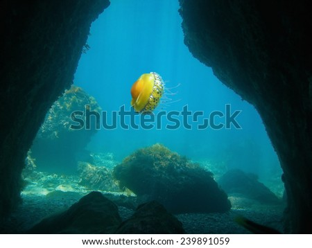 Exit of an underwater cave with a jellyfish, Mediterranean sea, France - stock photo