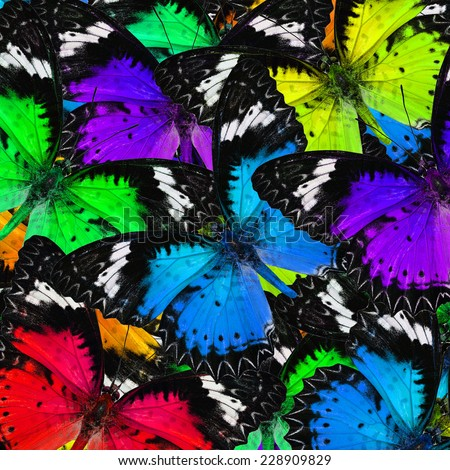 Exotic background texture made of colorful Leopard Lacewing butterflies - stock photo