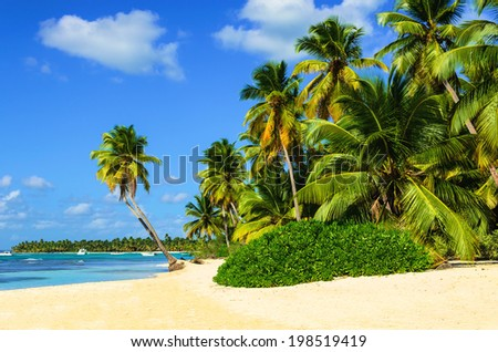 Exotic beach with a lot of palm trees and white sand - stock photo