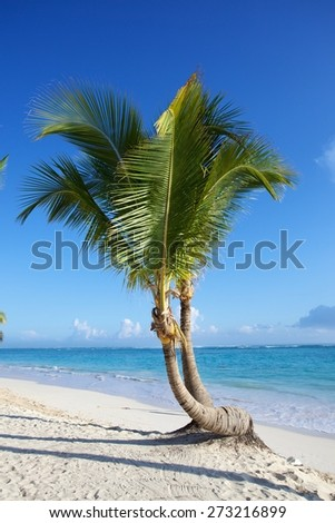 exotic beach with romantic palm tree by the beautiful caribbean  - stock photo