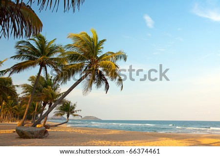Exotic, beautiful and secluded beach with palm trees in the foreground and the sea. The beach is deserted - stock photo