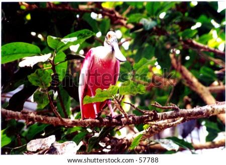 Exotic Bird - stock photo
