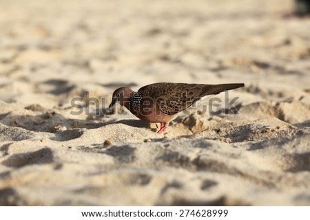 exotic bird walking along the beach hunting - stock photo