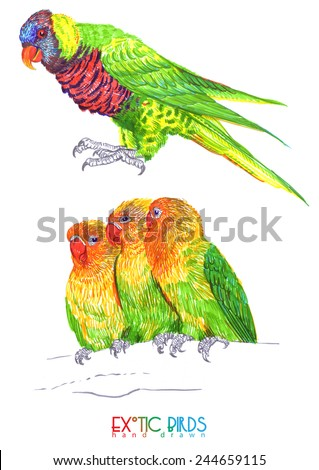 exotic birds drawn by hand - stock photo
