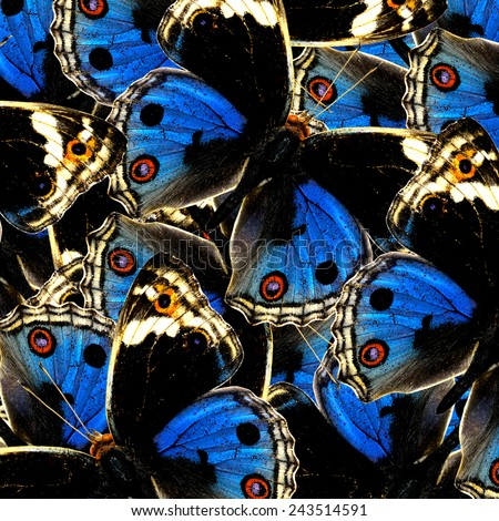Exotic Blue Background Texture made from Blue Pansy Butterflies in a great patterns design