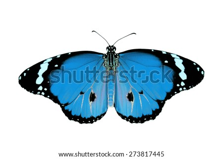 exotic blue color butterfly isolated on white background