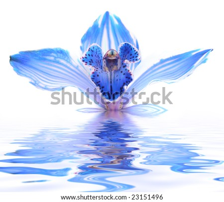 exotic blue orchid in water - stock photo
