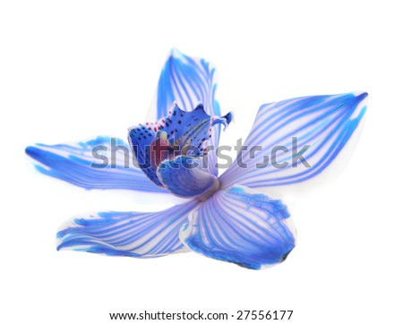 exotic blue orchid isolated on white - stock photo