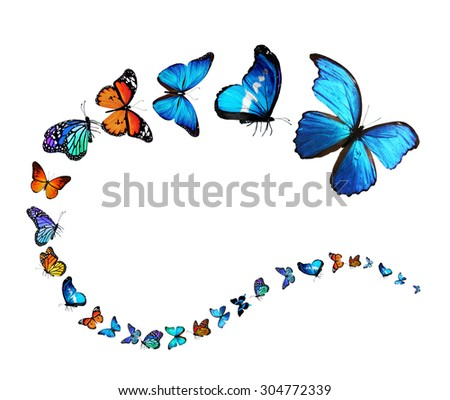 Exotic butterflies flying on white background as symbol of infinity and freedom - stock photo