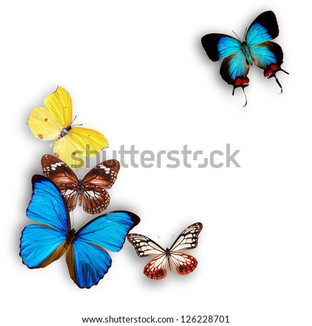 Exotic butterflies over white