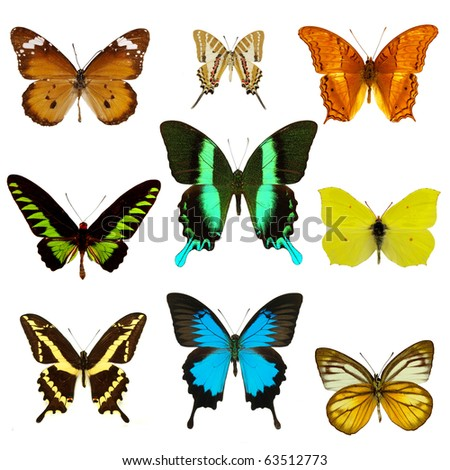 Exotic butterfly collection - stock photo